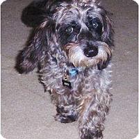 Adopt A Pet :: Jett - Orange Park, FL