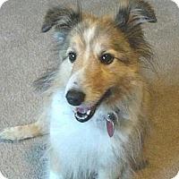 Adopt A Pet :: Izzy - Circle Pines, MN