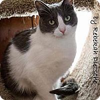 Adopt A Pet :: Jaycie - Byron Center, MI