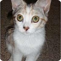 Adopt A Pet :: Daiquiri - Modesto, CA