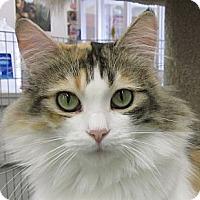 Adopt A Pet :: Anna - Winchester, CA