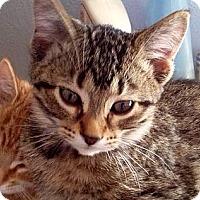 Adopt A Pet :: Brick - Green Bay, WI