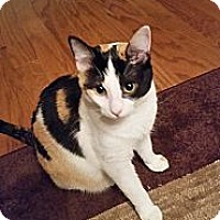 Adopt A Pet :: JJ - St. Louis, MO
