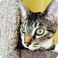 Adopt A Pet :: Brooklynn - Vancouver, BC