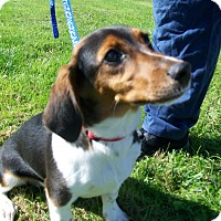 Adopt A Pet :: Willy - Lancaster, OH