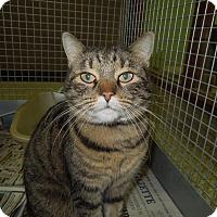 Adopt A Pet :: Carol - Medina, OH