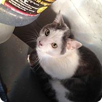 Adopt A Pet :: Oscar - East McKeesport, PA