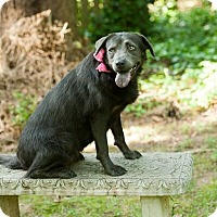 Adopt A Pet :: Reign - Knoxville, TN