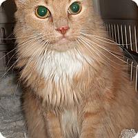 Adopt A Pet :: Mina - Chattanooga, TN