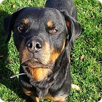 Adopt A Pet :: Dash - Rexford, NY