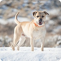 Adopt A Pet :: Bruce - Washoe Valley, NV