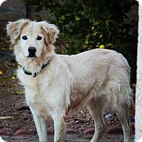 Adopt A Pet :: Hula - Phoenix, AZ