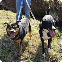 Adopt A Pet :: Simon and Garfunkel (ETAA) - Harrisonburg, VA