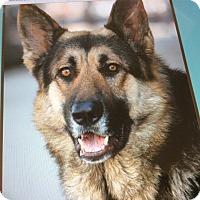 Adopt A Pet :: FALCON VON FRITZ - Los Angeles, CA