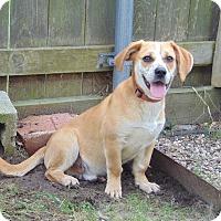Adopt A Pet :: Ambrosis - Lufkin, TX