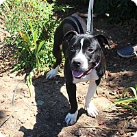 Adopt A Pet :: Eleanor - Yuba City, CA