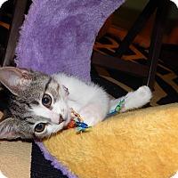 Adopt A Pet :: Bashful - Richmond, VA