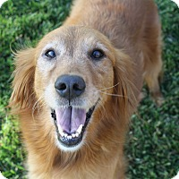 Adopt A Pet :: Sandy (and Ben) - Los Angeles, CA
