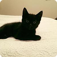 Adopt A Pet :: Elaine - Chicago, IL