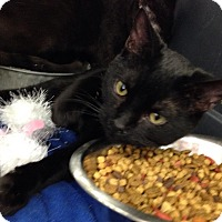 Adopt A Pet :: Black Jax - Vass, NC