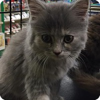 Adopt A Pet :: Mona - Ortonville, MI