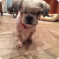 Adopt A Pet :: Max - N. Babylon, NY