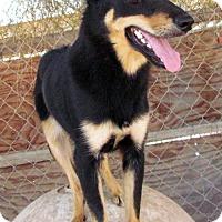 Adopt A Pet :: Ruby - San Tan Valley, AZ