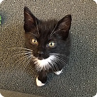 Adopt A Pet :: Pop - San Juan Capistrano, CA