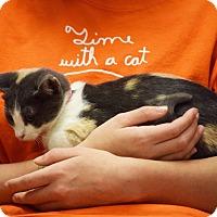 Adopt A Pet :: Sweet Pea - Dallas, TX