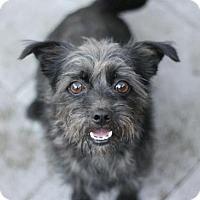 Adopt A Pet :: Ky - Canoga Park, CA