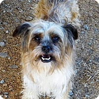 Terrier (Unknown Type, Medium) Mix Dog for adoption in Spartanburg, South Carolina - Coco of Monroe - hw+