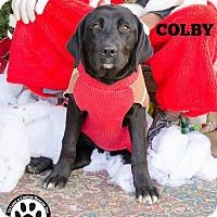 Adopt A Pet :: Colby - Kimberton, PA