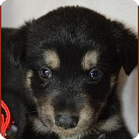 Adopt A Pet :: Alize - Simi Valley, CA