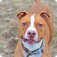 Adopt A Pet :: Zeus - Philadelphia, PA