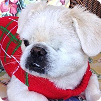 Adopt A Pet :: Valor - CUMMING, GA