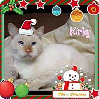 Adopt A Pet :: Kirby - Harrisburg, NC