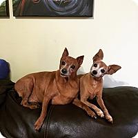 Adopt A Pet :: Buster & Maggie - Melbourne, FL