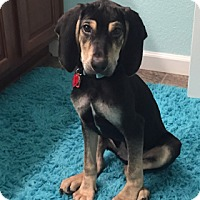 Adopt A Pet :: Diego - Broomfield, CO
