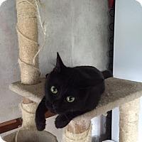 Adopt A Pet :: Bagheera - Hammond, LA