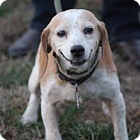 Adopt A Pet :: Polly - Glastonbury, CT