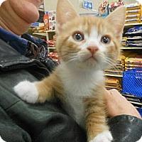 Adopt A Pet :: Patrick - Reston, VA