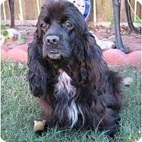 Adopt A Pet :: Taylor - Sugarland, TX