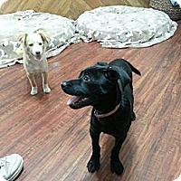 Adopt A Pet :: Max - Perris, CA