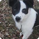 Adopt A Pet :: January