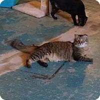 Adopt A Pet :: Sport - Geneseo, IL