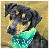 Adopt A Pet :: Megan - Forked River, NJ