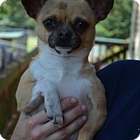 Adopt A Pet :: Sprocket - Temple, GA
