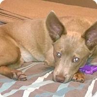 Adopt A Pet :: Hazel - Del Rio, TX