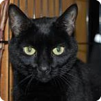 Adopt A Pet :: Lilli - Brooklyn, NY