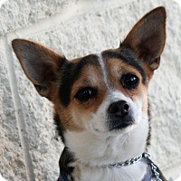 Adopt A Pet :: Destiny - Palmdale, CA